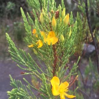 1 (62) Orquidea Amarilla - Cristina
