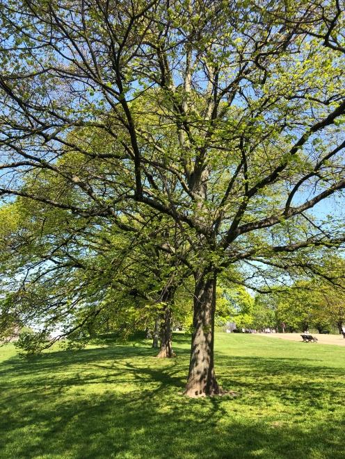 Hyde Park - Jennyskyisthelimit (3)