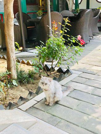2.Old Beijing - Ron Yard Hotel - Jenny Rojas - Jennyskyisthelimit (7)
