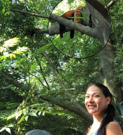 China Day 7 - Giant Panda Research Centre Chengdu - Red Pandas3