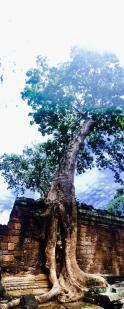 1 Angkor Complex - Preah Khan by Jenny Rojas (28)