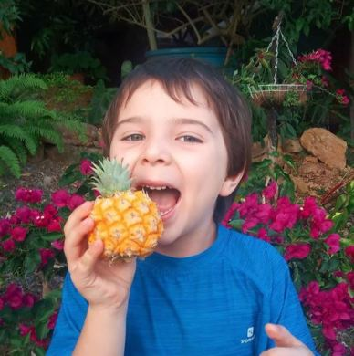 Frutos Conciencia Barichara - Margarita - Our first baby pineapple from our garden! - 100% Naturales